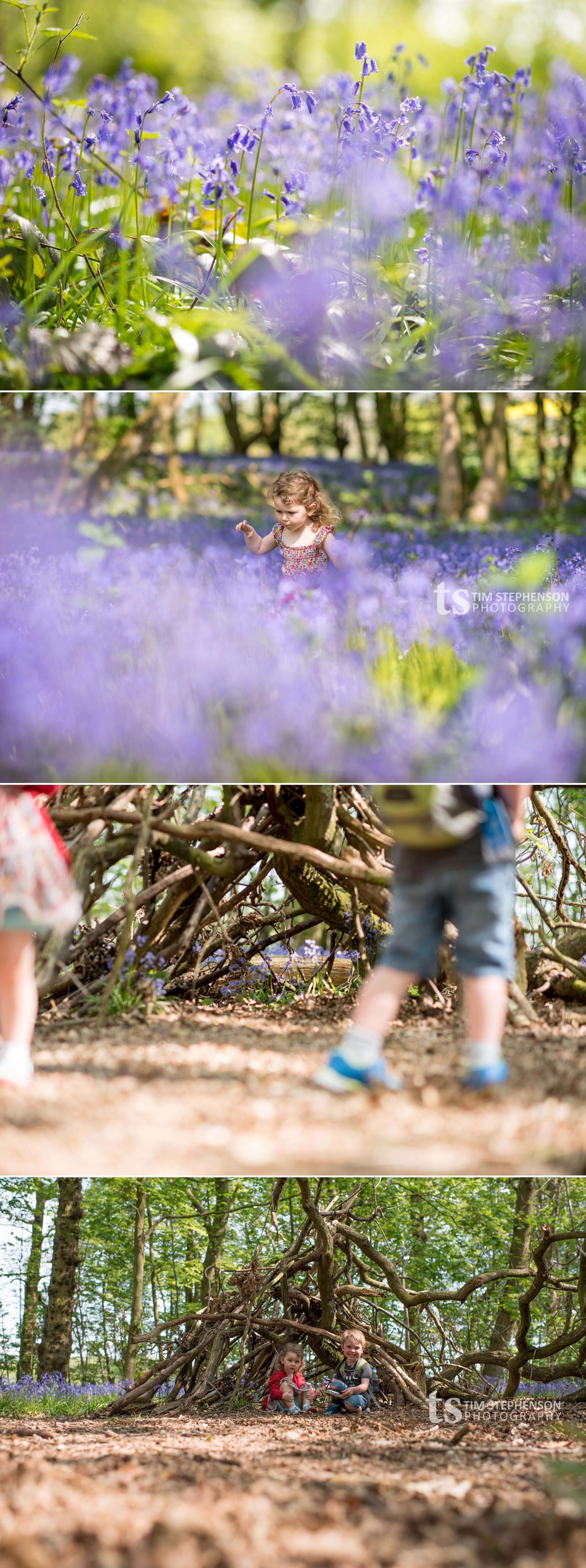 TimStephensonPhotography_Bluebells2016_1 copy