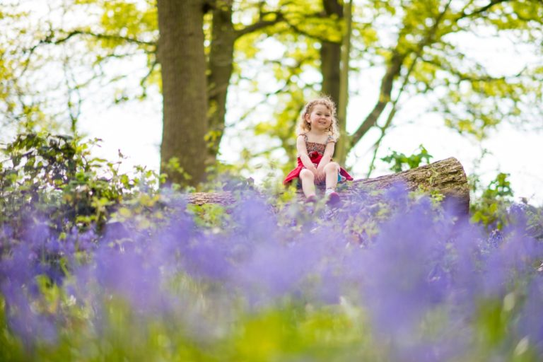 Beautiful Norfolk Woodland Bluebells – Norfolk Family Photography